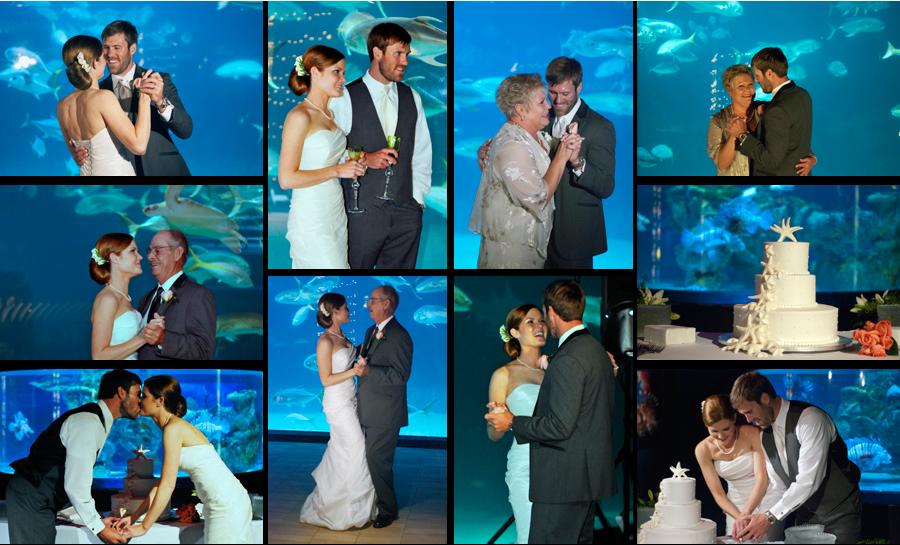 Aquarium Charleston Sc Wedding Venue